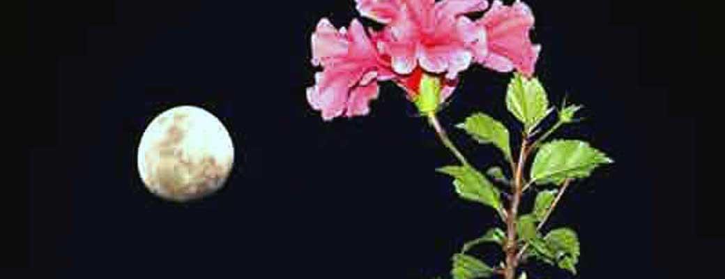 اعمال ماه جمادی الثانی یا جمادی الآخر